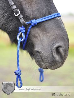This looks like a great bit less bridle set up.