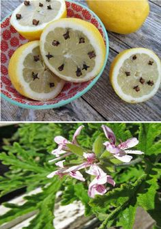 Five Top Tips For Natural Bug Repellents   Karon Grieve
