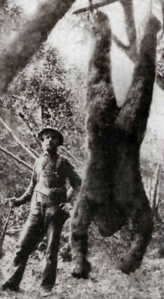 Old Photo of a captured Bigfoot