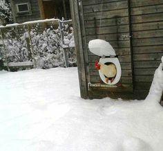 Chicken coop door toilet seat and lid repurpose