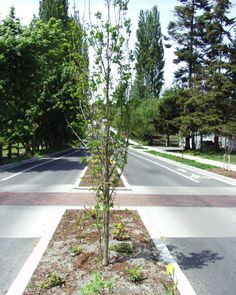 raised crosswalk, bike lane, Port Townsend, WA by svr light table, via Flickr