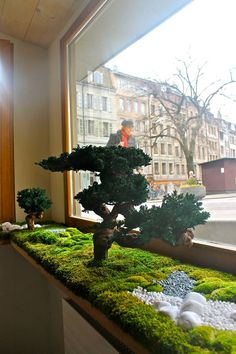 Best Pictures zen garden indoor Suggestions - New ideas Jardin Zen Interior, Interior Garden, Moss Wall Art, Moss Art, Plantas Bonsai, Fleur Design, Bonsai Garden, Bonsai Trees, Succulent Planters