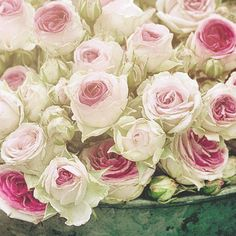 I LOVE THESE CABBAGE ROSES!!!  I am NOT SCREAMING at YOU!!! I am just emphasizing how much I LOVE THESE CABBAGE ROSES!!!   <3!! Flowers, especially CABBAGE ROSES!!!    I really do <3 them !!