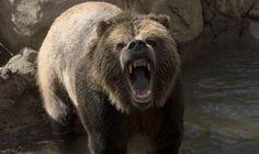 A Bear can run faster than Usain Bolt