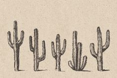 Ad: Big cacti bundle, sketch style by Bakani on Product includes: - 7 sets of hand drawn cacti AI, EPS (you can easily change color or scale it to any size you need) - 59 single hand drawn Arizona Tattoo, Western Tattoos, Cowboy Photography, Cactus Tattoo, Dorm Art, Flash Art, Environment Concept Art, Seamless Background, Western Art
