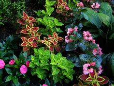 assortment of shade loving potted plants at entry | Pocket Gardens in Chicago | Through the Looking Glass