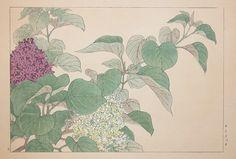 Tanigami, Konan (1879-1928)  Title:Lilac