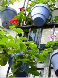 ¿Cuáles son las plantas más adecuadas para adornar vuestro balcón?