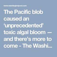 "The Pacific blob caused an 'unprecedented' toxic algal bloom — and there's more to come. Yet another warning sign that profound change is ""on the way"". But how many dopey politicians will heed the warning  - there are too many dumb asses who will elect them !"