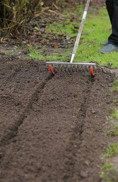 Saatrillen im Beet ziehen - Garden Types