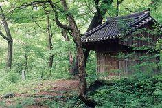 치악산 - 성황림(Mt. Chiaksan, Korea)