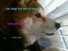 Philosophical Doge