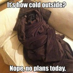 22 Funny Animal Pictures Of The Day #funny #picture