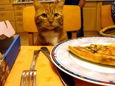 Cat ♥ Pizza # cute # red # anchovies # lunch # hungry
