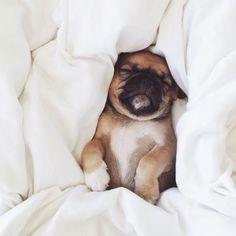 Mornings are like   #eyesonfloyd#dog . . . . . #love #instagood #me #tbt #cute #photooftheday #happy #beautiful #self #girl #picoftheday #smile #friends #fun #fashion #summer #instadaily #amazing #bestoftheday #instamood#style #family #sun #beauty #fashiondiaries #fashionista #fashioninspo #trend