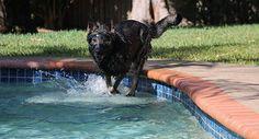 Dog Protective Eyewear • $79.95 • In Stock #PoliceK9s #servicedogs #protectiondog #guarddog #militarydog #rexspecs #rexspecsk9 #canine #eyewear #aviation #rescuedog #skydiving