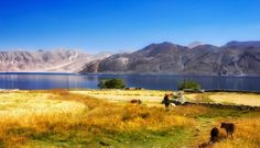 Photograph Tso - Moriri lake by yves bassot [ Tso Moriri lake, Ladakh,India]