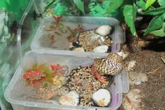 Salt AND fresh water is required! The hermit crab will make up his own mixture of water that he keeps in his shell. Great example of proper hermit crab pools! :) Crabitat Pools by ~GodzillaHermitCrab on deviantART Hermit Crab Cage, Hermit Crab Homes, Hermit Crab Habitat, Hermit Crabs, Crabby Patties, Crab House, Class Pet, Crab Shells, Crab Shack
