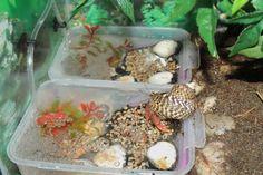 Great example of proper hermit crab pools!  :)  Crabitat Pools by ~GodzillaHermitCrab on deviantART