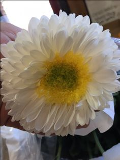 Chrysanthmum Bloom 'Inga'...Sold in bunches of 10 stems from the Flowermonger the wholesale floral home delivery service.