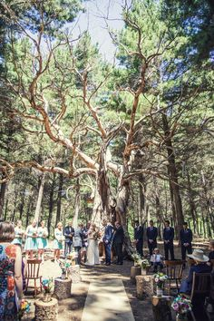 if i get married in adelaide it will be in the kuitpo forest