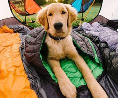 Make sure your pup is comfortable and snuggled up on your next trip with the Ruffwear Highlands Sleeping Bag for Dogs.