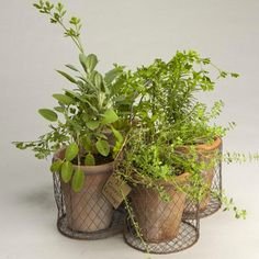 Rustic Herb Garden Kit - contemporary - indoor pots and planters - other metro - The Growers Exchange