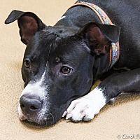 Adopt A Pet :: Max - Crete, IL