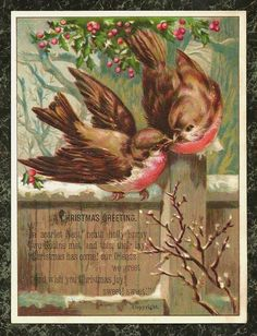 Two Birds Robins Kissing Embossed Victorian Christmas Card | eBay