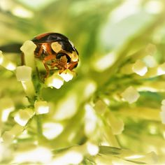 Ich wünsche euch ein tolles Wochenende 😉 . .  #instablogger #fotografie #blumen #flowers #insekten #photography #natur #nature #naturephotography #insect #getoutside #explore #justgoshoot #makro #macro #makro_fd #igbest_macros #macroworld #macro_x #macro_holic #macro_mood