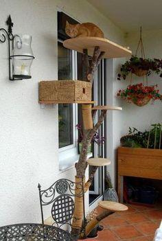 ein kratztraum die besten ideen zu fallende bl tter kratzbaum und der kopf. Black Bedroom Furniture Sets. Home Design Ideas