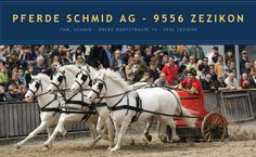 White Freibergers owned by Pferde Schmid AG