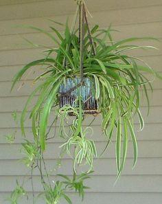 simple jute plant hanger video tutorial