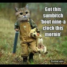 Redneck kitty....this made me laugh way too hard