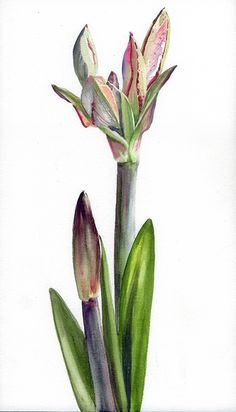 """""""Day 3,"""" 14x8"""" Vintage Botanical Prints, Botanical Art, Floral Watercolor, Watercolor Paintings, Floral Illustrations, Painting Inspiration, Antique, Drawings, Plants"""