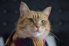 Streetcat Bob ❤