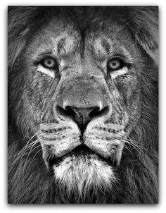 potrait_of_a_lion_by_cluke111-d5g9ocy.jpg (790×1012)