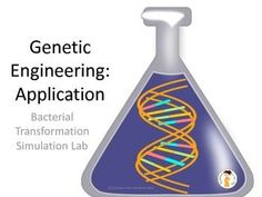 Genetic Engineering / Bacterial Transformation Lesson Plan  I searched for a lab or hands-on activity on genetic engineering that would make the process less abstract, and more understandable to my students. I wasn't able to find what I wanted, so I wrote