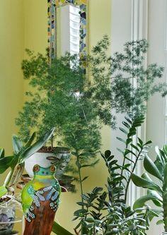 indoor.fern.JPG