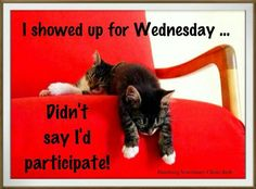New funny good morning quotes humor mondays ideas Friday Quotes Humor, Wednesday Memes, Happy Wednesday Quotes, Wednesday Greetings, Wacky Wednesday, Happy Friday, Wednesday Prayer, Wonderful Wednesday, Monday Humor