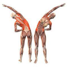 Left bend - Salamba Konasana left - Yoga Poses | YOGA.com