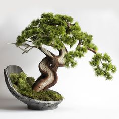 Artificial bonsai tree made in Sharamiki style. Embedded in the shell. Made from scratch by hand. Bed Headboard Design, Contemporary Desk, Cedar Trees, Flower Planters, Garden Stones, Resort Style, Nature Decor, Ikebana, Flower Decorations