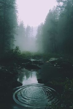Dark Green Aesthetic, Nature Aesthetic, Forest Photography, Travel Photography, Underwater Photography, Animal Photography, White Photography, Family Photography, Photography Tips