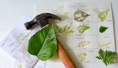 As summer break comes to a close and garden plants are ready for harvest, what can you do with the leaves of the plants you pull out, besides compost them? Leaf prints! Leaf prints are fun easy to make, and depending on whether you do it as art alone or as an extension to a botany lesson this activity spans the age ranges from K-12!