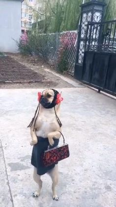 Animals And Pets, Funny Animals, Cute Animals, Funny Animal Videos, Funny Animal Pictures, Simple Cat Drawing, Cute Funny Dogs, Animal Antics, Funny Laugh