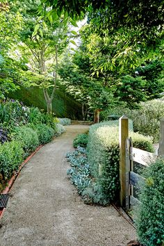 Cottage style garden with an Australian twist: a gravel path is bordered by a Westringia fruticosa 'Wynyabbie Gem' hedge.