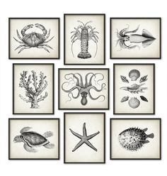 Marine Bathroom Print Set of 9 Marine Biology Bathroom Decor