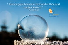 #MondayMotivation. There is great beauty to be found in life's most fragile creations.