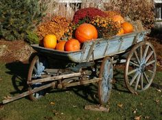 chippy old blue painted wooden wagon filled with mums and pumpkins....love...