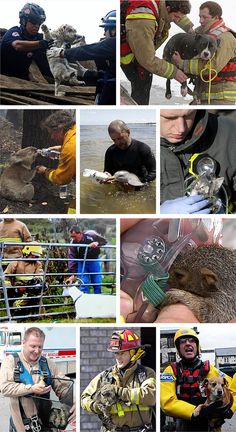 beautiful photos of animals being rescued